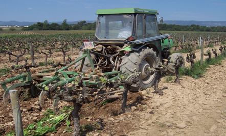 Tractor in the vinyard